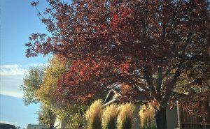 Suburban Yard in Fall