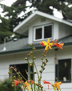 Photo of an orange flower with house in background