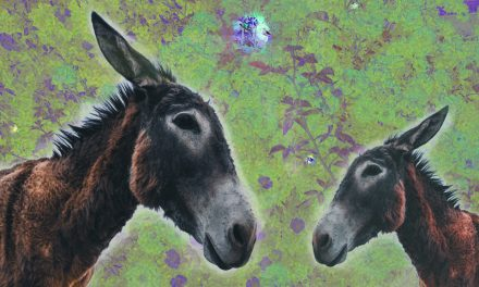 A donkey, Donkey's colt and a Vine in Genesis